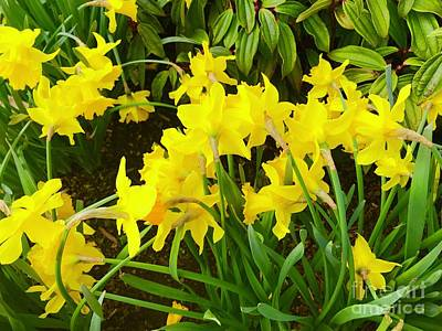Photograph - Spring Daffodils by Suzanne Lorenz