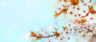Photograph - Spring Flower Blossom Closeup With Bokeh Background. Springtime  by Jelena Jovanovic