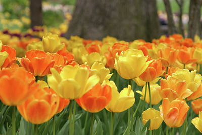 Photograph - Spring Flowers  by Images Unlimited