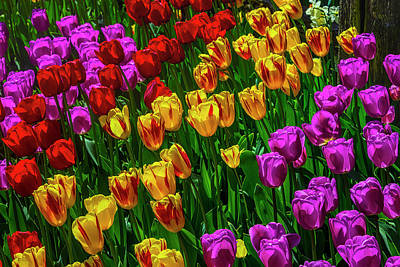 Photograph - Spring Garden Tulips by Garry Gay