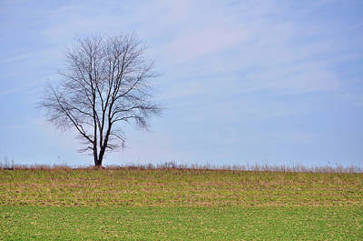 Photograph - Spring Horizon  by JAMART Photography