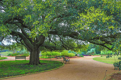 Photograph - Spring In Hermann Park by Dan Sproul