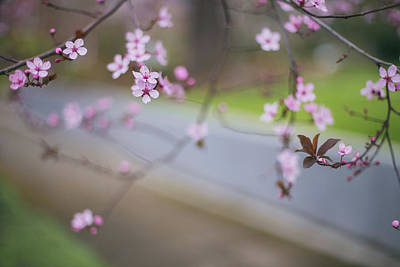 Photograph - Spring In Portland by Kunal Mehra