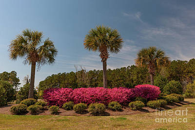 Photograph - Spring In The Palmetto State  by Dale Powell