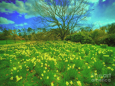 Photograph - Spring Is In The Air by Leigh Kemp