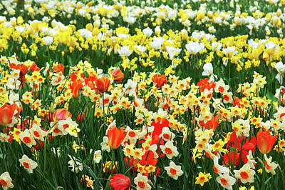 Photograph - Spring Joy. Keukenhof Botanical Garden by Jenny Rainbow