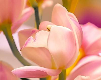 Photograph - Spring Joy by Susan Rydberg