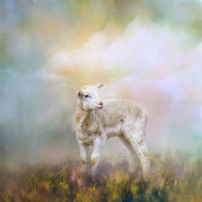 Photograph - Spring Lamb by Jai Johnson