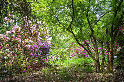 Photograph - Spring Marvels. Blooming Rhododendrons 1 by Jenny Rainbow