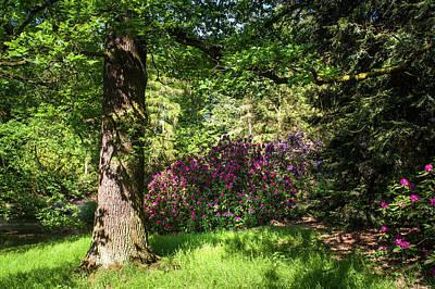 Photograph - Spring Marvels. Sunny Day by Jenny Rainbow