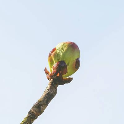 Photograph - Spring Tree Buds Opening D by Jacek Wojnarowski