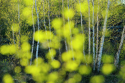 Photograph - Spring Trees As Seen Through Out Of by Don Johnston