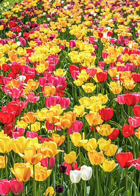 Photograph - Spring Tulip Field #11 - Vertical by Patti Deters