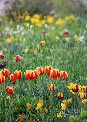 Photograph - Spring Tulip Garden by Karen Adams