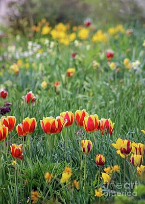 Photograph - Spring Tulip Garden by Karen Adams