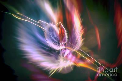 Impressionism Photos - Spring willow 3 by Veikko Suikkanen