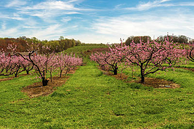 Fruits And Vegetables Still Life - Springtime Apple Orchard in New England by Steven Kornfeld