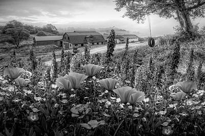 Photograph - Springtime At The Farm In Black And White by Debra and Dave Vanderlaan