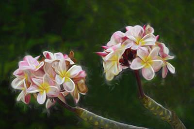 Photograph - Springtime In Hawaii by Pamela Walton