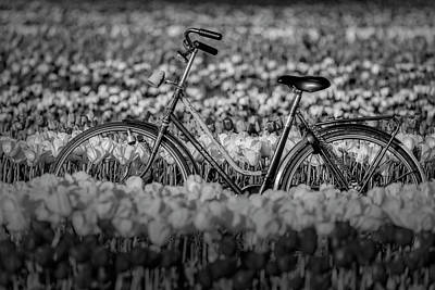 Photograph - Springtime Tulips And Bike Bw  by Susan Candelario