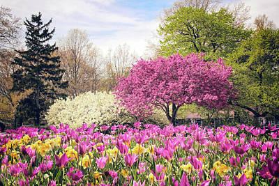 Photograph - Springtime Tulips by Jessica Jenney
