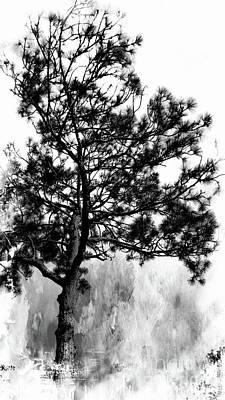Photograph - Spruce Tree by Marcia Lee Jones