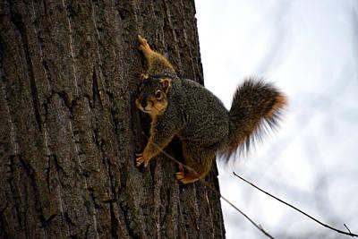 Berea Wall Art - Photograph - Squirrel 2 by James Richmond