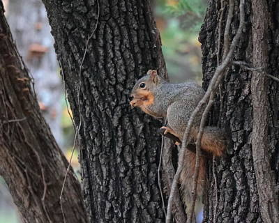 Photograph - Squirrel 3469 by John Moyer