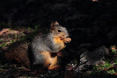 Photograph - Squirrel 4037 by John Moyer