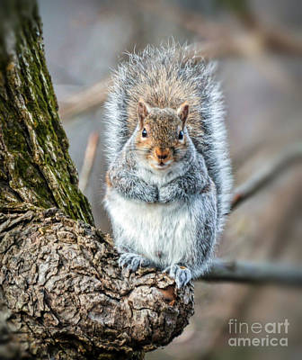 Photograph - Squirrel In His Winter Coat by Kerri Farley
