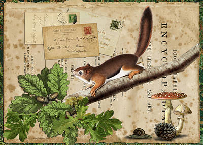 Digital Art - Squirrel Nuts by Terry Kirkland Cook