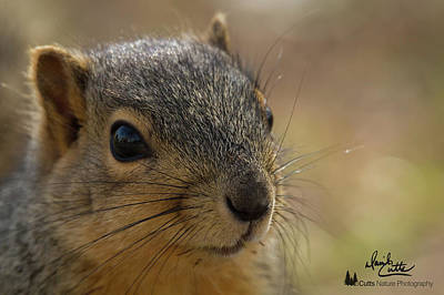 Photograph - Squirrel Portrait by David Cutts