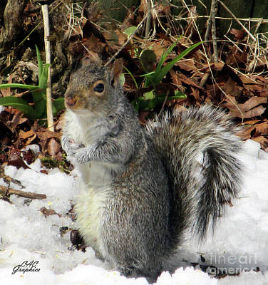 Photograph - Squirrel Pose by CAC Graphics