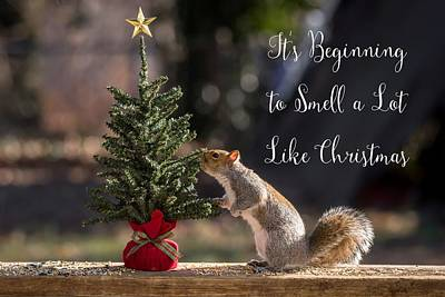 Christmas Squirrels Wall Art - Photograph - Squirrel Smells Like Christmas  by Terry DeLuco