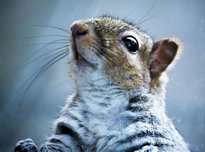 Photograph - Squirrel With Nose In The Air by Scott Lyons