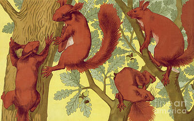 Painting - Squirrels By Maurice Pillard Verneuil by Maurice Pillard Verneuil