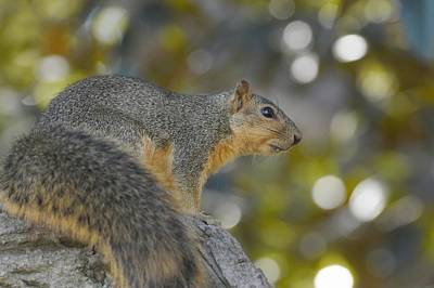 Photograph - Squirrely by Fraida Gutovich