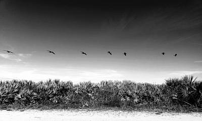 Outerspace Patenets Rights Managed Images - St. Augustine Birds in Flight 3 BW Royalty-Free Image by Colene Milligan