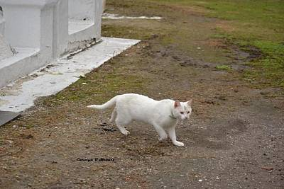 Wall Art - Photograph - White Cemetery Cat With Goldern Eyes by Carolyn Hebert