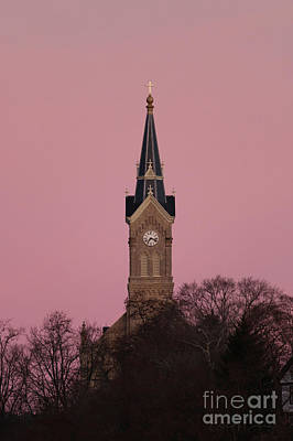 Animal Portraits - St. Marys in pink by Eric Curtin