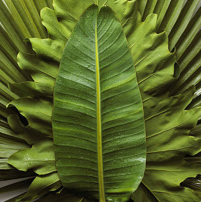 Photograph - Stack Of Leaves by Burke/triolo Productions