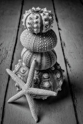 Photograph - Stacked Sea Urchins And Starfish Black And White by Garry Gay