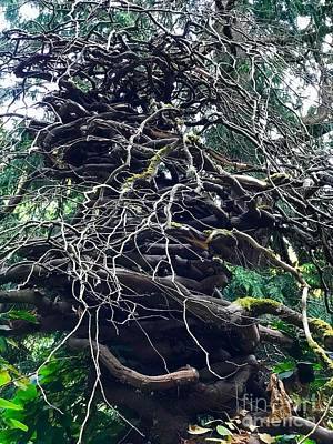 Photograph - Stacked Tree by Suzanne Lorenz