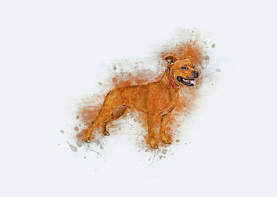 Digital Art - Staffordshire Bull Terrier by Ian Mitchell