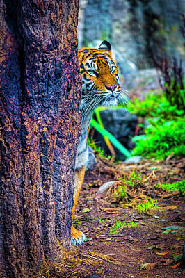 Photograph - Stalking Tiger by Garry Gay