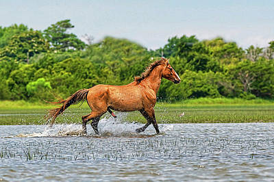 Photograph - Stallion Running Through The Water by Dan Friend