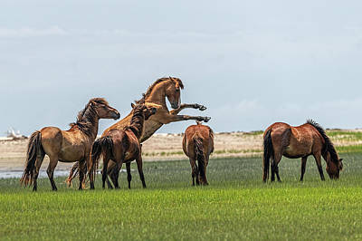 Photograph - Stallion Sowing His Wild Oats by Dan Friend