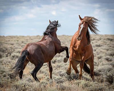 Photograph - Stallion Speak by Mary Hone
