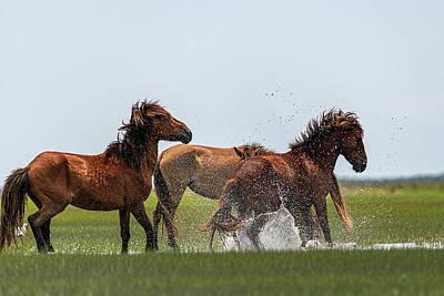 Photograph - Stallions Doing Macho Stuff by Dan Friend