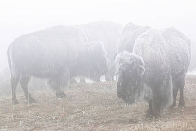 Photograph - Standing In The Frozen Fog by Brian Gustafson